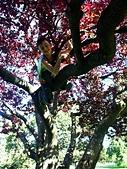 百分百玩加3-B:維多利亞之比根丘公園~橡樹灣~黃金溪:PICT0044a.jpg