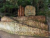 滿月圓森林雨中漫步:PICT0096a.jpg