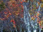 這一季的高山農場~武陵+福壽山:PICT0089a.jpg
