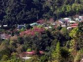 春訪奧萬大森林遊樂區:PICT0006a.jpg