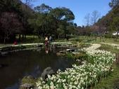 2014 陽明山花季:PICT0003a.jpg