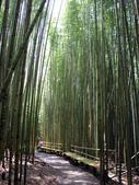 司馬庫斯之森林溪瀑:IMG_4488a.jpg
