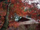 這一季的高山農場~武陵+福壽山:PICT0090a.jpg