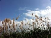 汐止拱北殿楓紅:PICT0050a.jpg