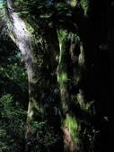 司馬庫斯之森林溪瀑:IMG_4430a.jpg