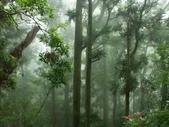 「 水漾森林」~尋幽探祕:PICT0101a.jpg