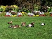 百分百玩加3-B:維多利亞之比根丘公園~橡樹灣~黃金溪:PICT0050a.jpg