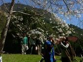 春訪奧萬大森林遊樂區:PICT0022a.jpg