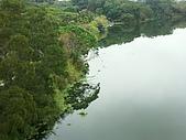 峨眉湖十二寮步道採桔:PICT0027a.jpg