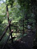 司馬庫斯山林漫步:IMG_4452a.jpg