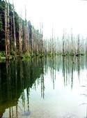 「 水漾森林」~尋幽探祕:PICT0111a.jpg
