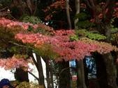 這一季的高山農場~武陵+福壽山:PICT0095a.jpg