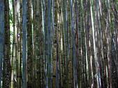 司馬庫斯之森林溪瀑:IMG_4491a.jpg