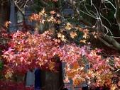 這一季的高山農場~武陵+福壽山:PICT0102a.jpg