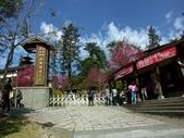 鹿谷內湖國小,美景如畫~:PICT0131a.jpg