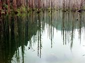 「 水漾森林」~尋幽探祕:PICT0115a.jpg