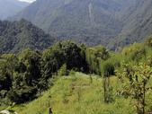 司馬庫斯山林漫步:IMG_4468a.jpg