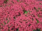 百分百玩加4-B:維多利亞--布查花園(Butchart Garden ):P1010222a.jpg