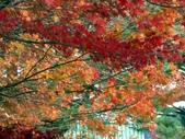 這一季的高山農場~武陵+福壽山:PICT0097a.jpg
