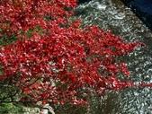 這一季的高山農場~武陵+福壽山:PICT0004a.jpg