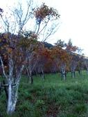這一季的高山農場~武陵+福壽山:PICT0087a.jpg