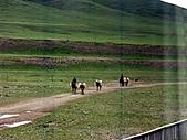 走進西藏:~青藏鐵路/西寧塔爾寺/北京(過境) :PICT0046m.jpg