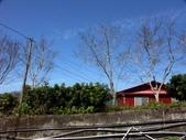 春訪奧萬大森林遊樂區:PICT0009a.jpg