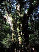 司馬庫斯之森林溪瀑:IMG_4427a.jpg