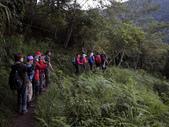 司馬庫斯山林漫步:IMG_4353a.jpg