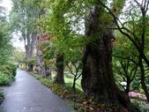 百分百玩加4-B:維多利亞--布查花園(Butchart Garden ):P1010231a.jpg