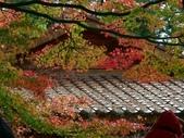這一季的高山農場~武陵+福壽山:PICT0136z.jpg