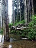 「 水漾森林」~尋幽探祕:PICT0123a.jpg