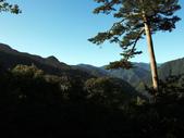 司馬庫斯山林漫步:IMG_4375a.jpg