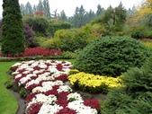 百分百玩加4-B:維多利亞--布查花園(Butchart Garden ):P1010218a.jpg