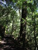 司馬庫斯山林漫步:IMG_4379a.jpg