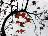 汐止拱北殿楓紅:PICT0005a.jpg