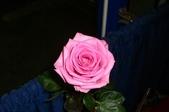 ♥°週休二日之古典玫瑰園下午茶+士林夜市:1512009834.jpg