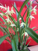960915二水水鄉米香產業文化-二水農會供銷部:PICT0063.JPG