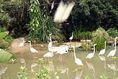 台北市動物園:027