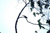 內洞森林遊樂區:015
