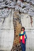 嘉義新港阪頭村的三大壁畫:「原鄉四季」的苦楝花014.JPG