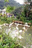 台北市動物園:024