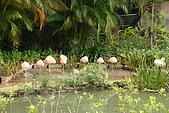台北市動物園:026