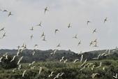 亞馬遜生態休閒農莊賞鳥:137.JPG
