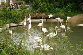 台北市動物園:025