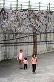 嘉義新港阪頭村的三大壁畫:「原鄉四季」的苦楝花005.JPG