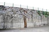 嘉義新港阪頭村的三大壁畫:「原鄉四季」的苦楝花008.JPG