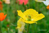 春之饗宴~2013梅峰農場~:DSC_8533.jpg