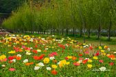 春之饗宴~2013梅峰農場~:DSC_8547.jpg