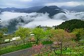 上山露營:DSC_5739.jpg